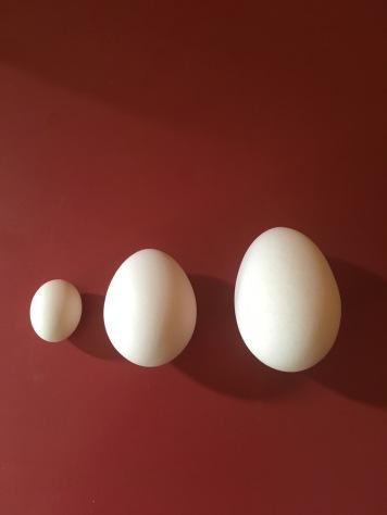 eggs 3 sizes