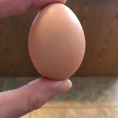 2018 egg