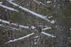 three keets in tree